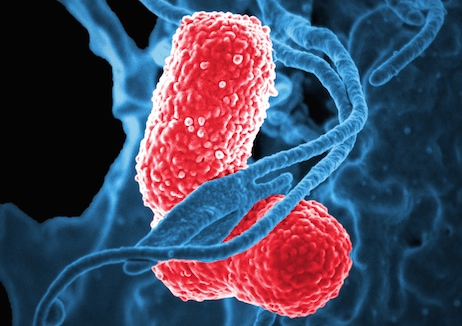 Targeting drug-resistant infections