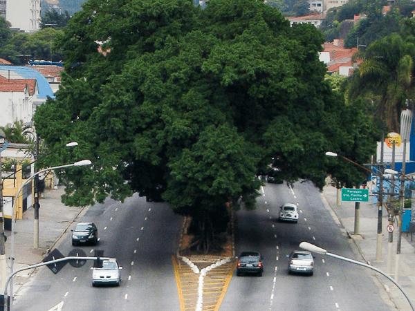 Trees (over grass) to promote health in urban settings