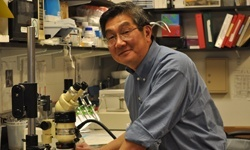 Akira Tsuda, principal research scientist in the Molecular and Integrative Physiological Sciences Program in the Department of Environmental Health at HSPH.