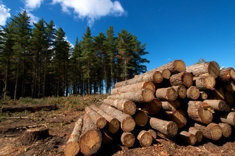 Logging and ecosystem alterations