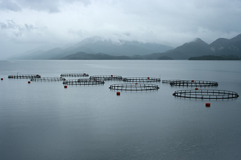 Fish farm in Chile's Canal Puyuguapi