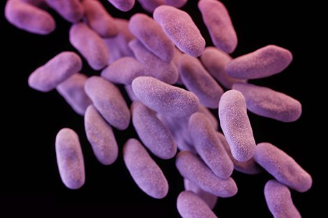 Drug-resistant 'nightmare bacteria' show worrisome ability to diversify and spread