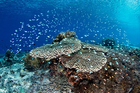 The connection between coral reefs and human health