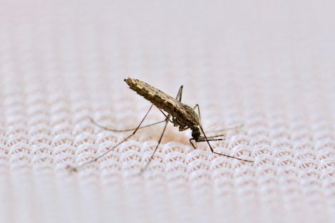 A new approach to fighting malaria