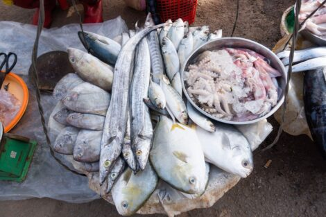 More affordable aquatic foods could prevent 166 million micronutrient deficiencies worldwide