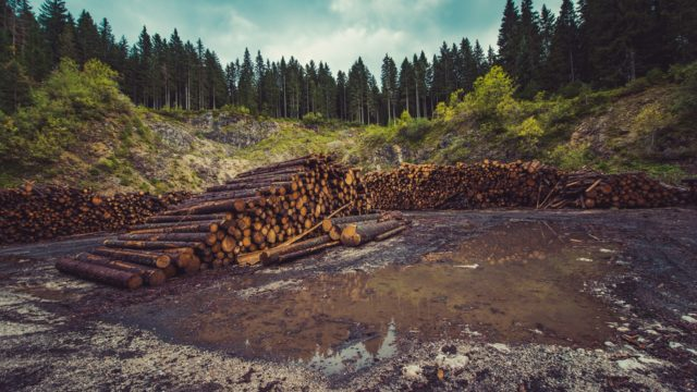 Pile of logs at the edge of a forest