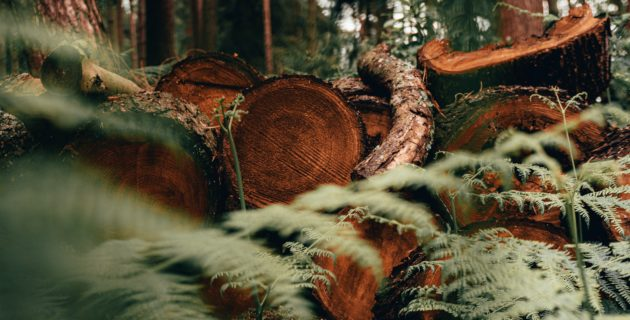 Fallen tree trunks are stacked in a forest