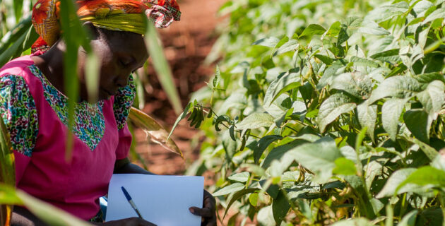 a woman tests climate-smart soil in Kenya