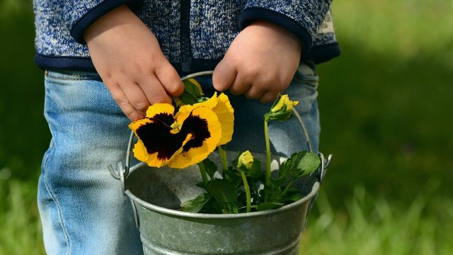 A child holds a pail with a pansy growing out of it