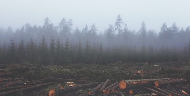 trees chopped down in a forest