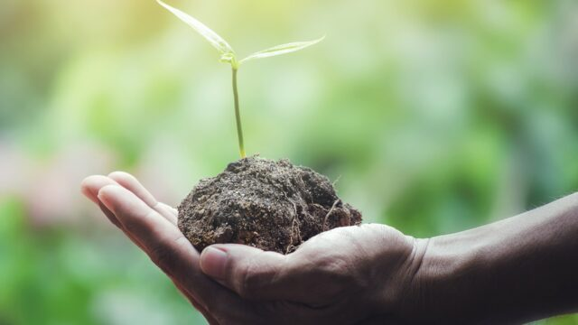Hands hold the sprout of a tree.