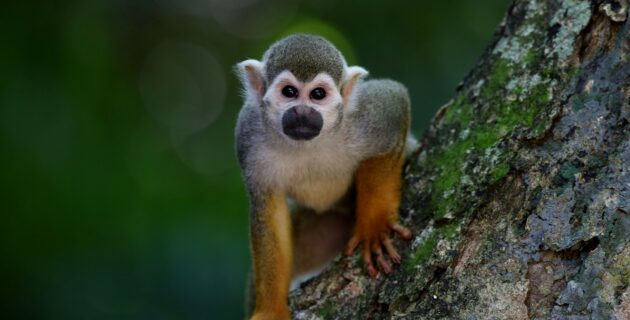 A small monkey perches in a tree.