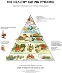 healthy eating pyramid (healthyeatingpyramid-tiny.jpg)