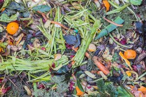 Compost pile with cut greens