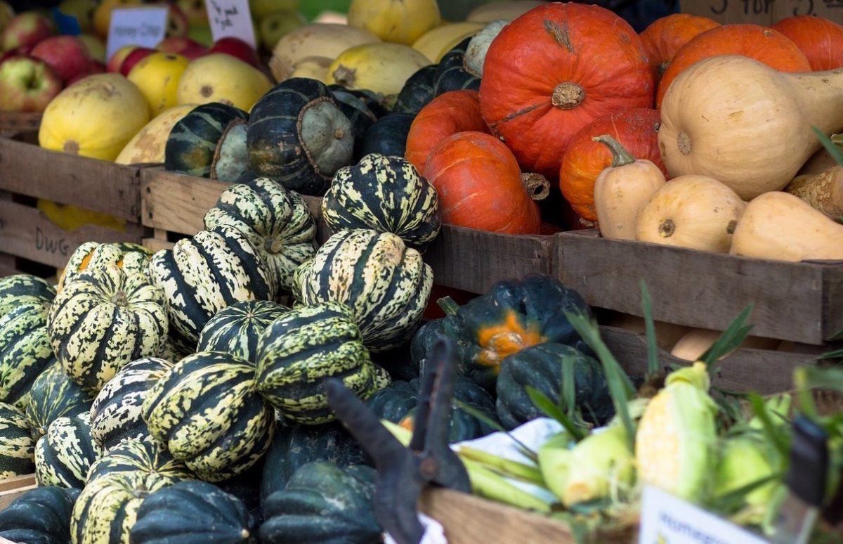 Varieties of winter squash at a farm stand