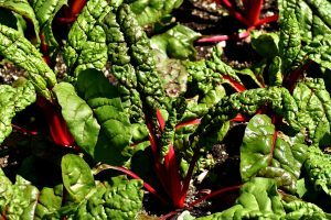 ruby chard decorated with itself the nutrition source harvard