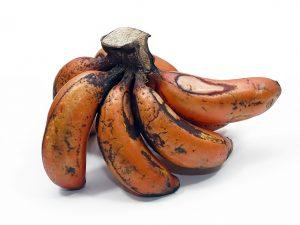 bunch of small red bananas