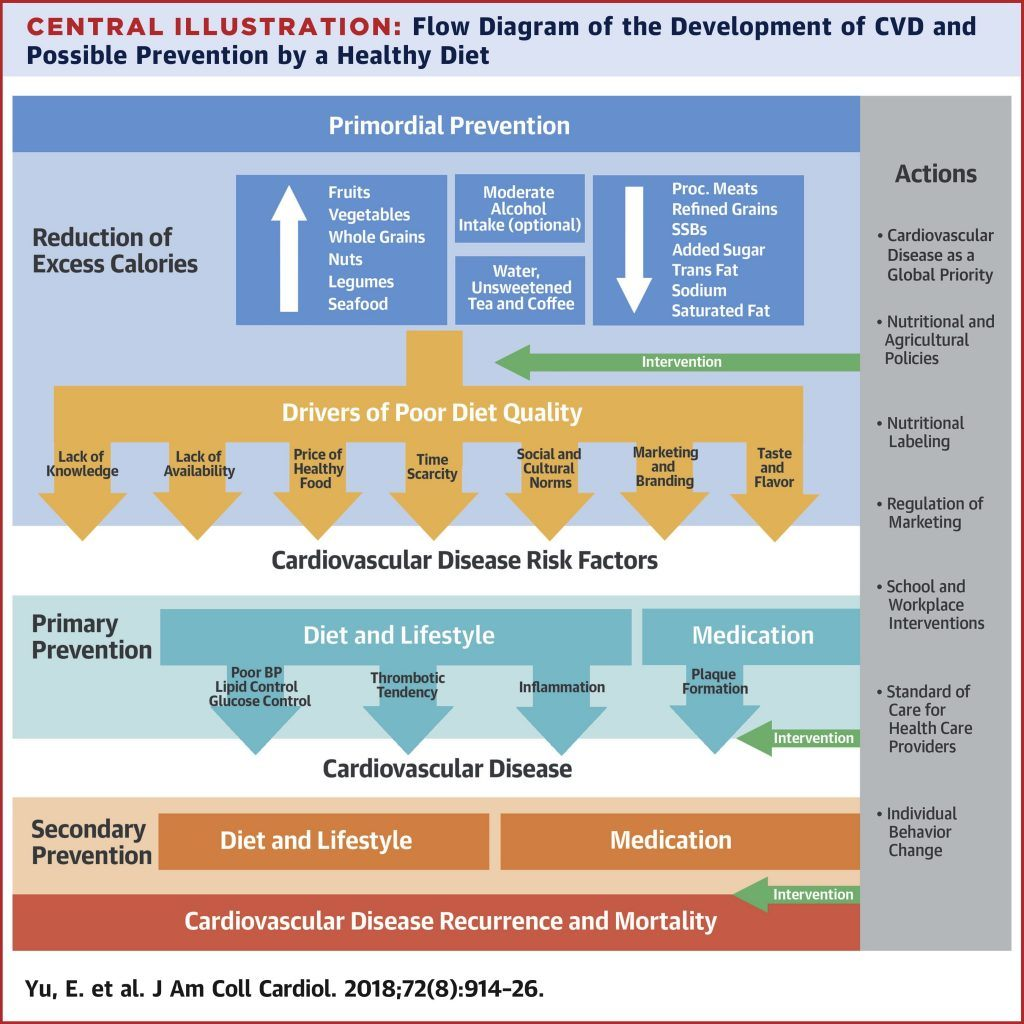 Flow Diagram of the Development of CVD and Possible Prevention by a Healthy Diet