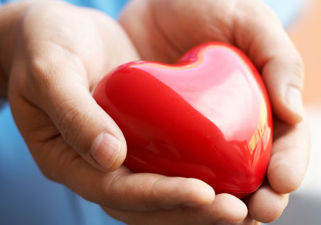 hands holding a red model heart