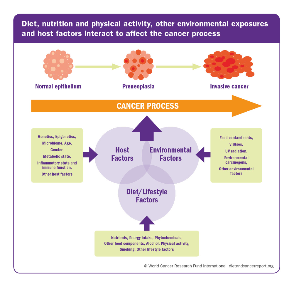 Figure 4: Diet, nutrition and physical activity, other environmental exposures, and host factors interact to affect the cancer process