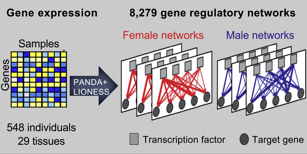 New Study Sheds Light on Sex-Based Differences in Gene Regulation