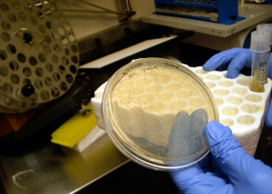 close up of gloved hands handling a petri dish in a lab