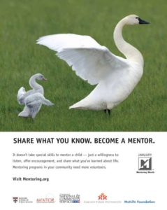 Swans (Cygnet emulates mother) -- National Mentoring Month: Share what you know. Become a mentor.